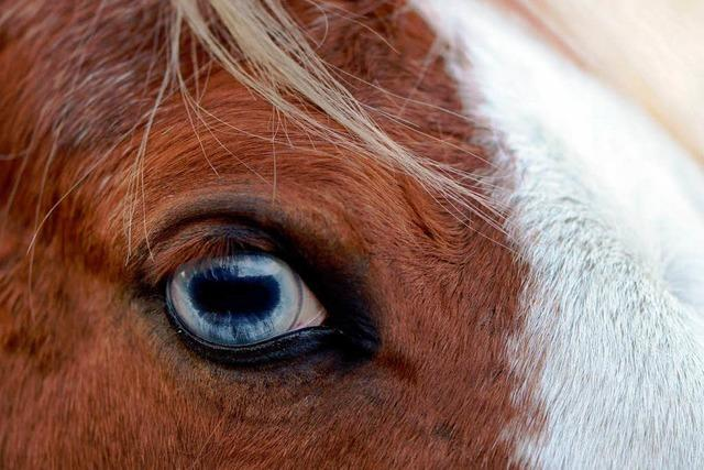 34 mal Pferdefleisch entdeckt – Handel wehrt sich gegen Kritik