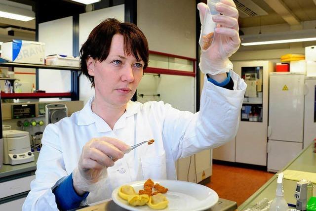 Freiburger Experten finden Pferdefleisch in jeder vierten Probe