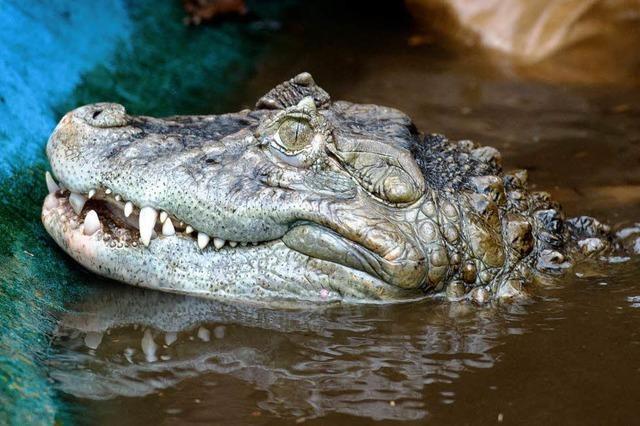 Bad Krozingen: Kurhaus will verhindern, dass sich Crocodile Brothers einnisten