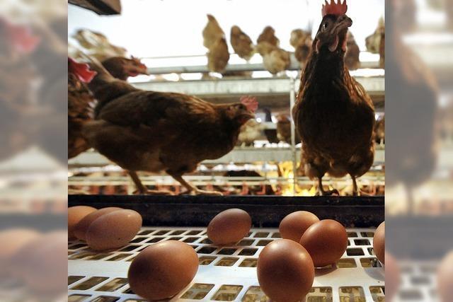 Verdacht auf Betrug mit Eiern