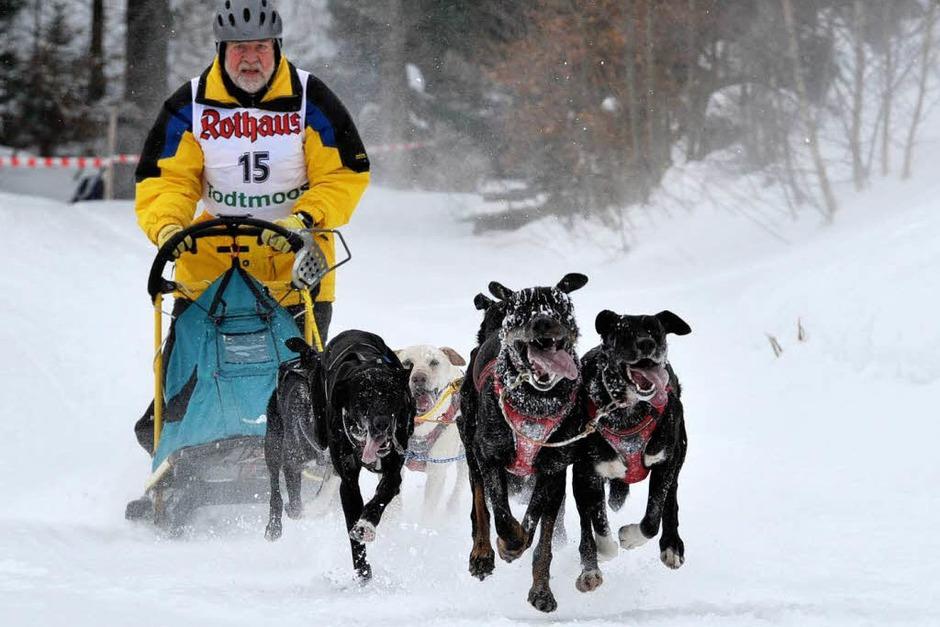 Mensch und Tier im Schnee: Das Schlittenhunderennen in Todtmoos (Foto: Andrea Schiffner)
