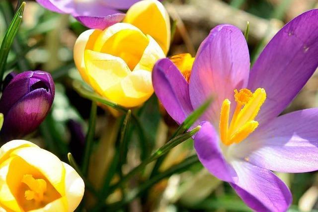 Der Frühling kommt pünktlich zum Wochenende nach Südbaden
