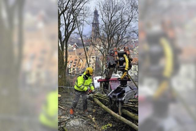 Könner am Werk – Münster in Sicht