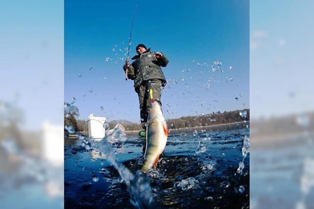 Fischwildererei nimmt zu – Kontrollen gegen Schwarzangler