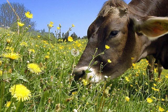 Gemeinde Buchenbach fördert Landwirtschaft