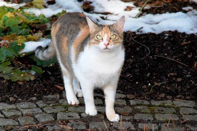 Viele Fundkatzen sind oftmals gar keine