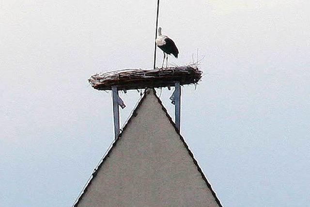 Neues Nest ist heiß begehrt
