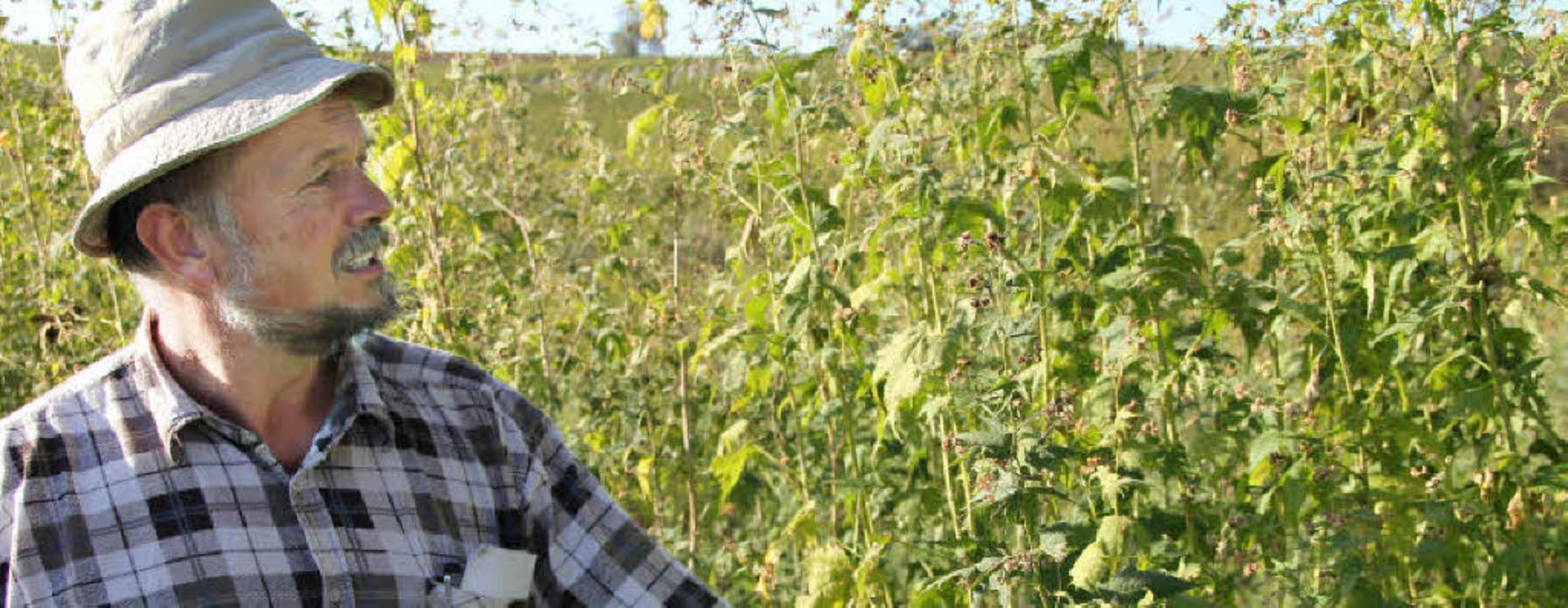 Peter Kaltenbach ist mit der Entwicklu...üten. Eine Honigweide für die Bienen.   | Foto: sabine model