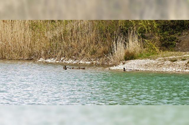 Baggersee-Ufer wird umgestaltet