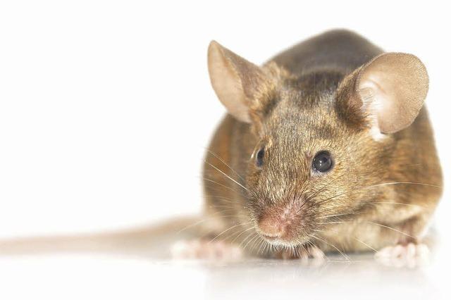 Begegnung mit der Maus: Zwischen Ekel und Entzücken