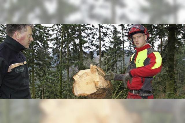 Wie Wald Arbeit und Erholung bringt