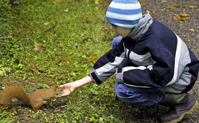 Begegnung im Wald: Spazieren gehen ist langweilig, Eichhörnchen füttern nicht.    Foto: Anita Fertl