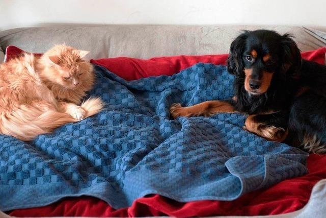Hunde und Katzen dürfen bleiben