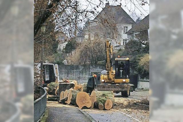 Alte Bäume zu fällen, fällt nicht leicht