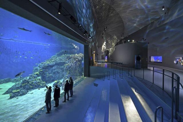 Hammerhai am Öresund: Nordeuropas größtes Aquarium eröffnet