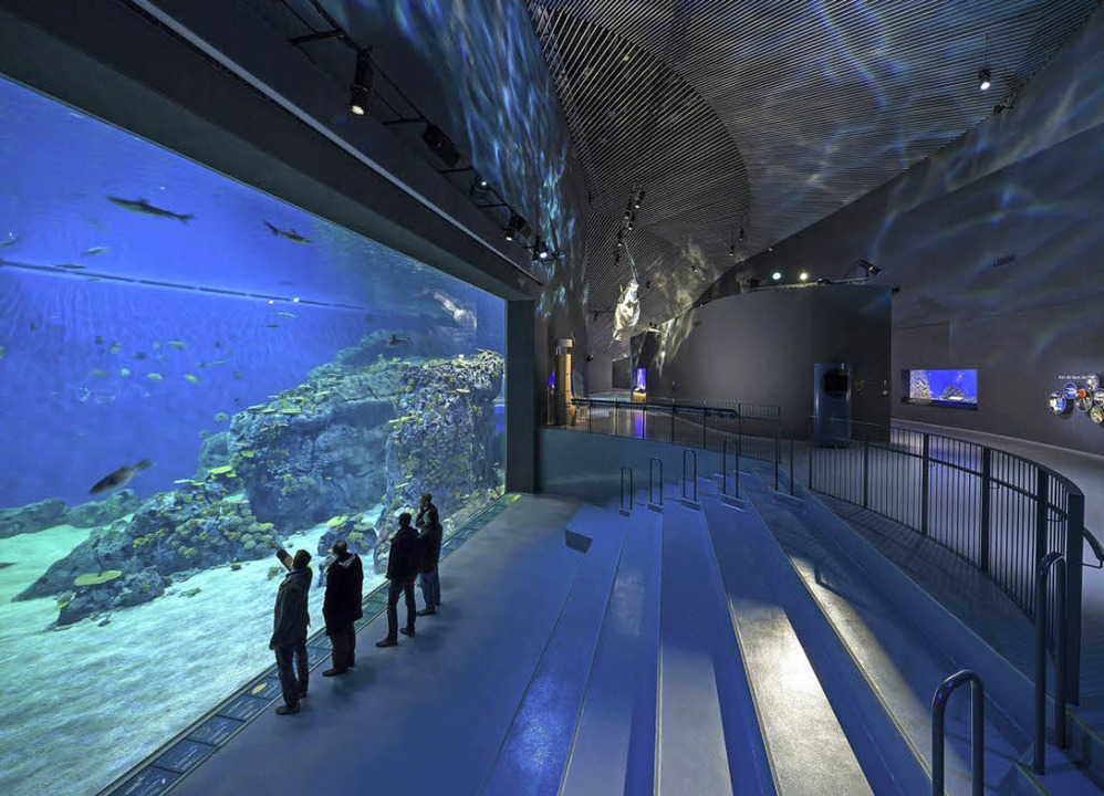 hammerhai am resund nordeuropas gr tes aquarium er ffnet panorama badische zeitung. Black Bedroom Furniture Sets. Home Design Ideas