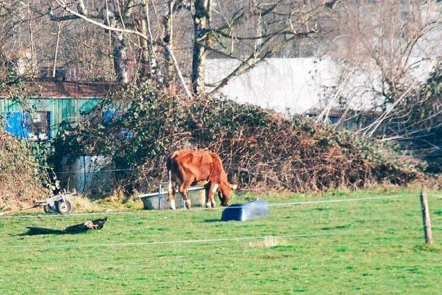 Trotz Verbot: Landratsamt findet neues Vieh