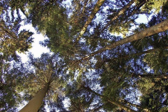 Kein Vertrauen in Wald-Prognosen