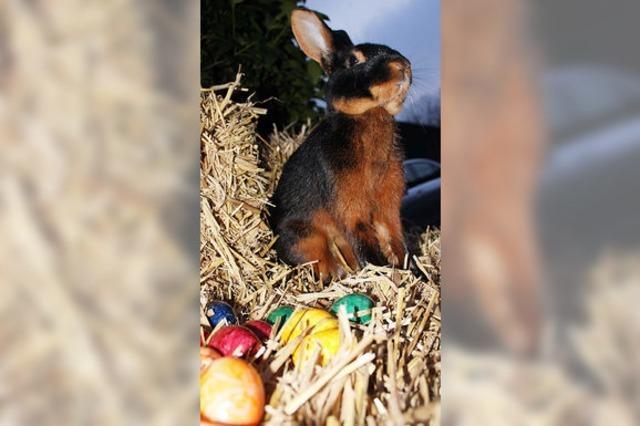 Ein Hase, der eigentlich wenig Lust auf Ostern hat