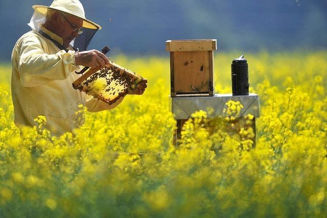 Landflucht der Bienen