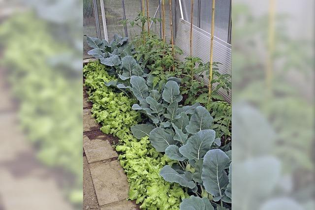 Mit Sonnenwärme Gemüse ziehen