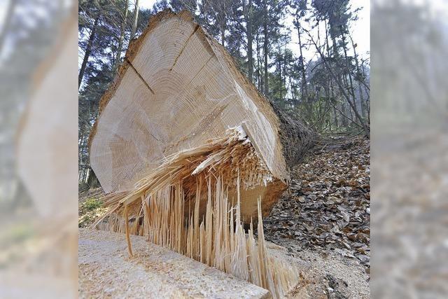 1440 Lastwagenladungen Holz pro Jahr