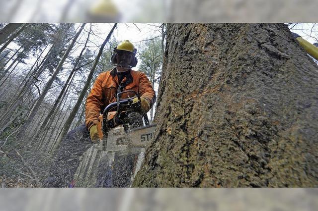 Soll das städtische Forstamt zum Eigenbetrieb werden?