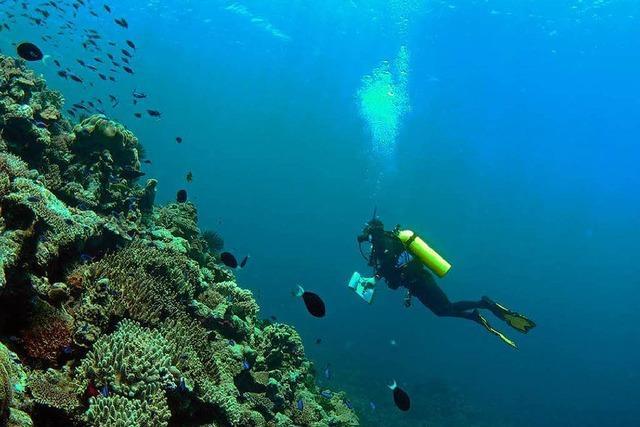 Korallenriffe können sich aus sich selbst heraus erholen