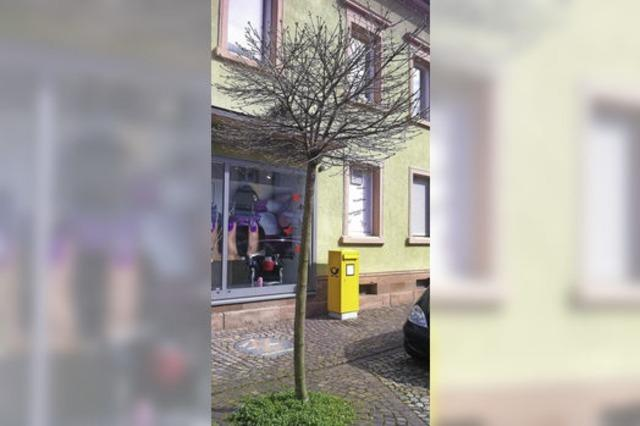 Gemeinderat möchte keine blühenden Bäume in der Innenstadt