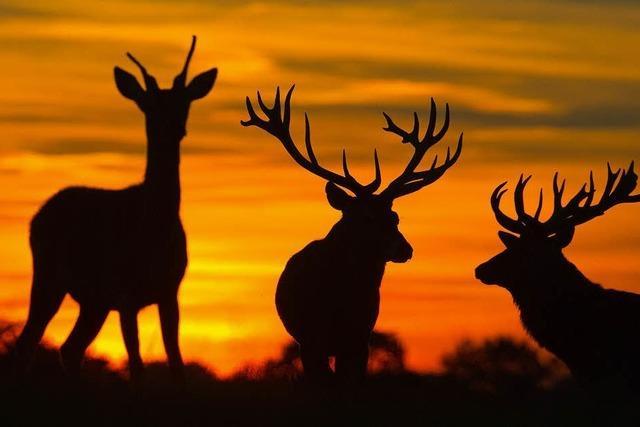 Jäger legen ihre Zahlen vor
