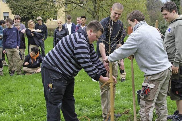 Schüler pflanzen jedes Jahr einen Baum