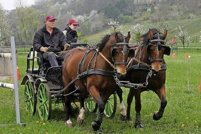 Mit dem Pferdegespann durch enge Tore