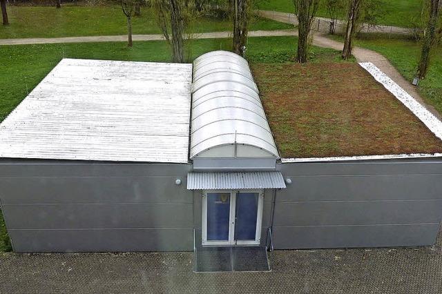 Grünes Dach gegen Hitze