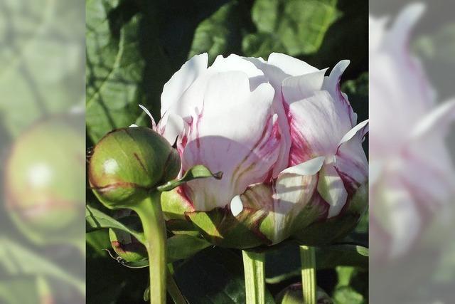 Zeit für Blumen, Stauden und Gehölze