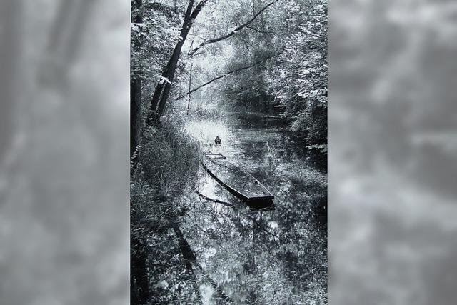 Die Rheinauen im Bild