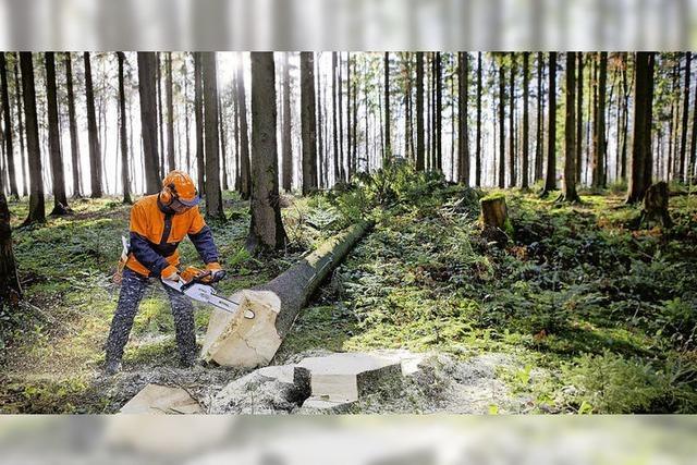 Der Wald liefert stabile Umsätze