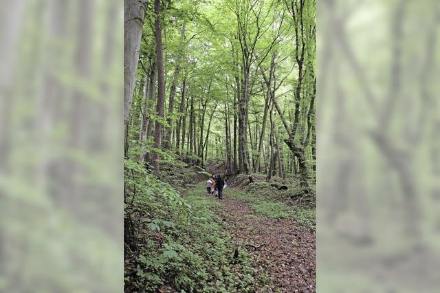 Wenn der Wald allein gelassen wird