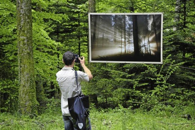 Wald mit Erlebniswert