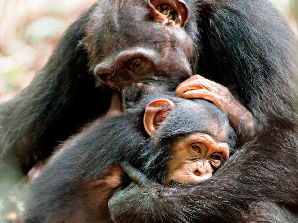 Affenliebe: Isha und Oscar   | Foto: dpa