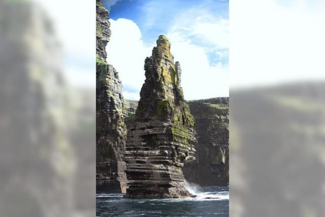 Immer der Nase nach: Irland für Zugvögel