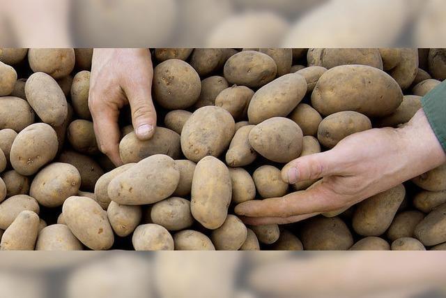 Kartoffelkartell im Visier