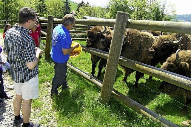 Weniger Vermieter in Gersbach - Tourismus hat zu knabbern