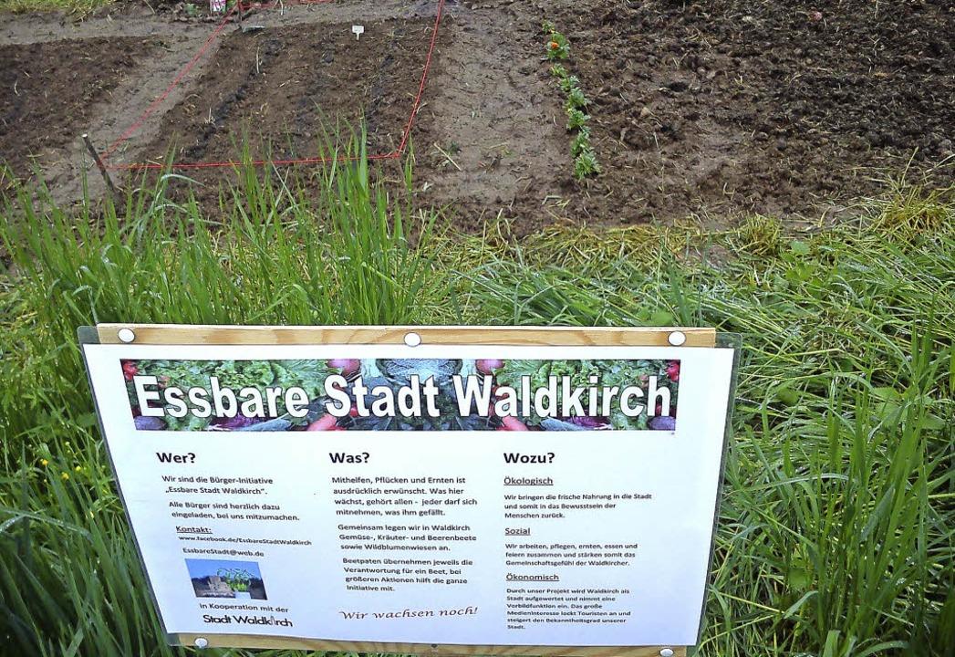 Das erste Beet der Initiative befindet...hen der Mauermattenstraße und der Elz.    Foto: Rebekka Sommer