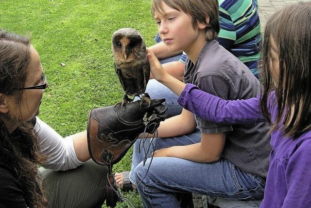 Kinder sind mit Falken und Eulen auf Du und Du