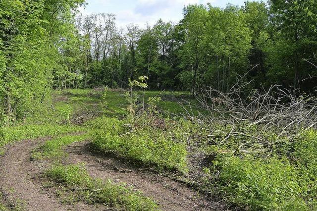 Die Krux mit dem Ersatz-Wald