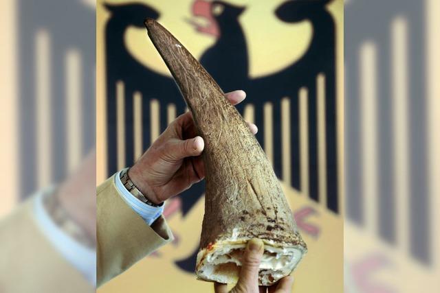 AUCH DAS NOCH: Dem Nashorn auf der Spur