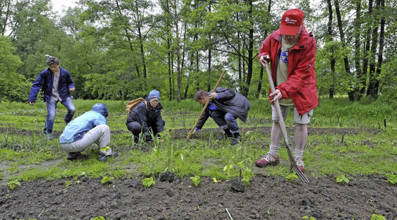 Anpacken: In Weingarten wird gemeinsam im Klimagarten gewerkelt.  | Foto: Michael Bamberger