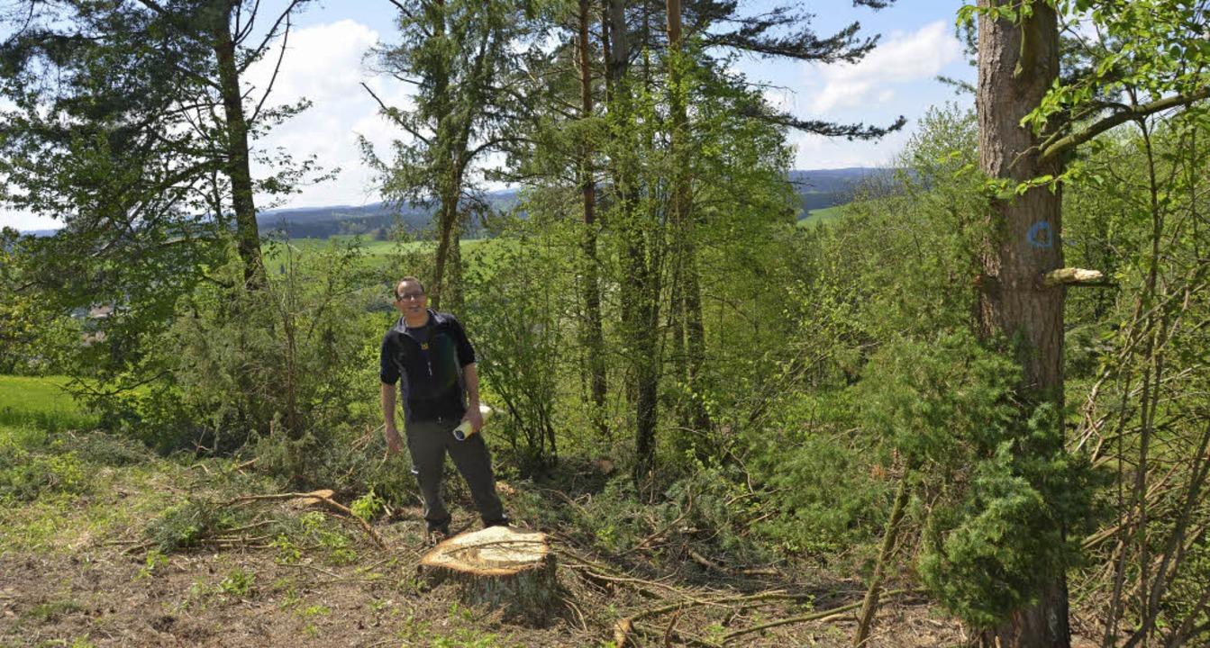 Hier wurde kräftig ausgeholzt: Unter R...tener Blumen drastisch einschränkten.   | Foto: Juliane Kühnemund
