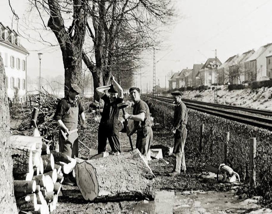 Mit Muskelkraft ran an den Baum.     Foto: Armin E. Möller