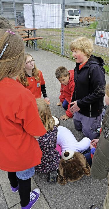 Teddy mit Beinbruch wird vom Jugendrotkreuz gerettet    Foto: Sebastian Probst